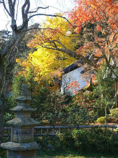 東慶寺 本堂 紅葉