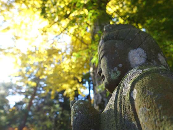 東慶寺 銀杏