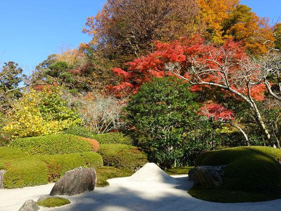 明月院 枯山水庭園 紅葉