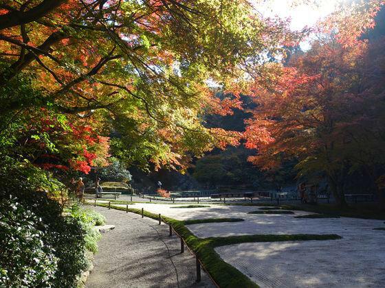 明月院 後庭園 紅葉