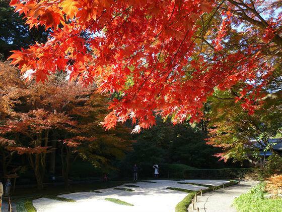 明月院 後庭園 楓
