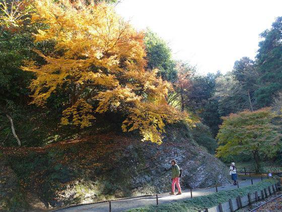 後庭園 明月院 紅葉