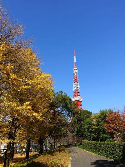 赤羽橋 東京タワー イチョウ