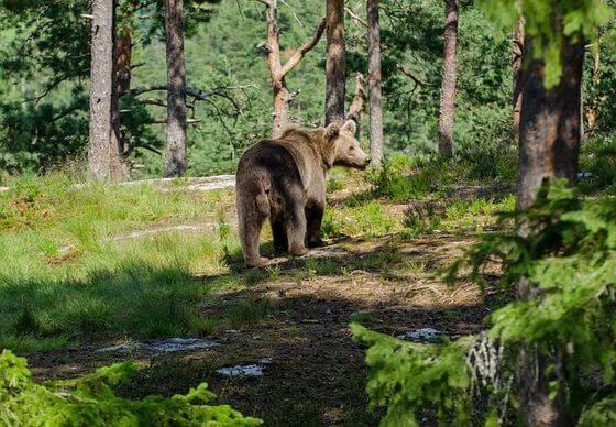 登山 熊 対策