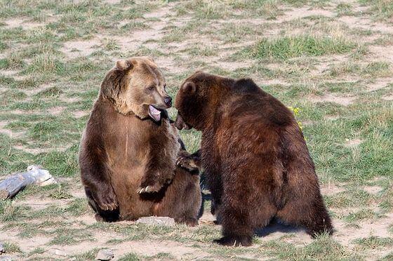 登山 熊に遭遇したら