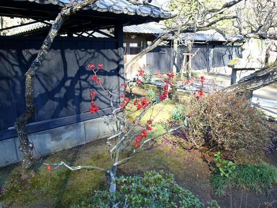 鎌倉 東慶寺 ボケ