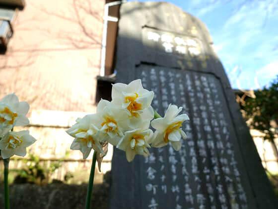 鎌倉 宝戒寺 水仙