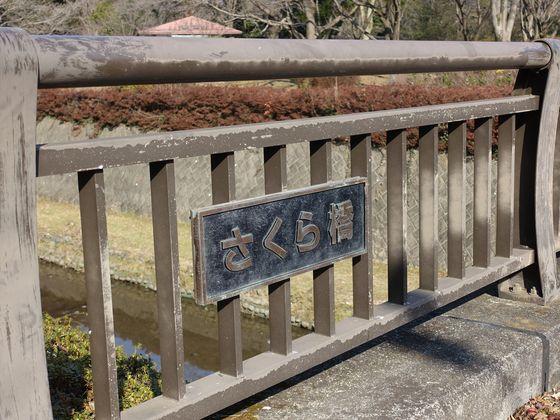国営昭和記念公園 さくら橋