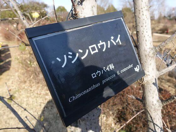 昭和記念公園 こもれびの池 ロウバイ