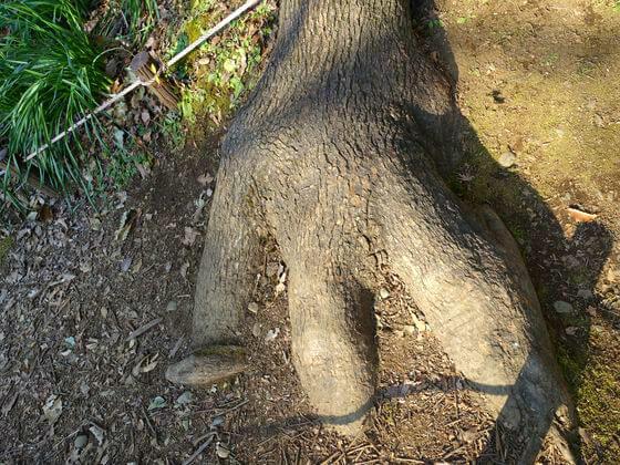 昭和記念公園 恐竜の足