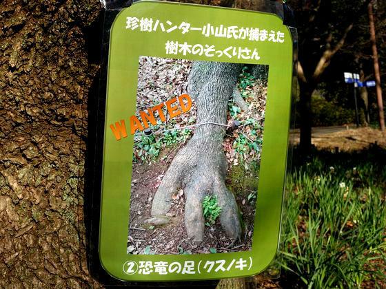 昭和記念公園 珍樹ハンター