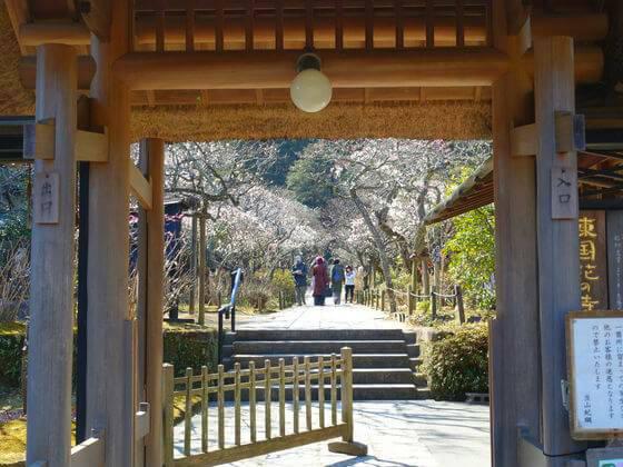 鎌倉 東慶寺 梅