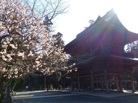 鎌倉 円覚寺 梅
