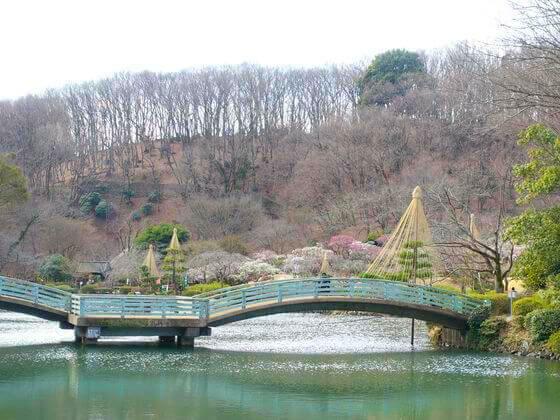 薬師池公園 太鼓橋
