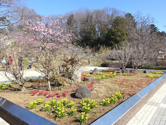 森林公園 梅林 花壇