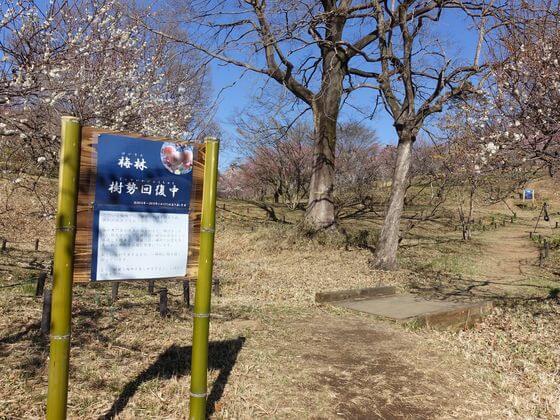 森林公園 梅林入口