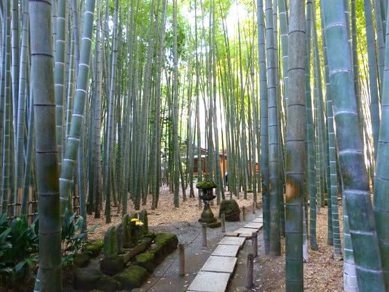 鎌倉竹林報国寺