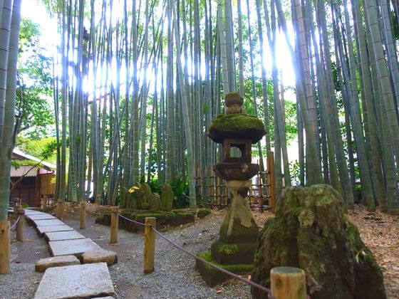 鎌倉 竹林