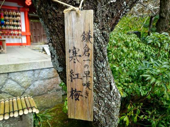 荏柄天神社 鎌倉一 梅