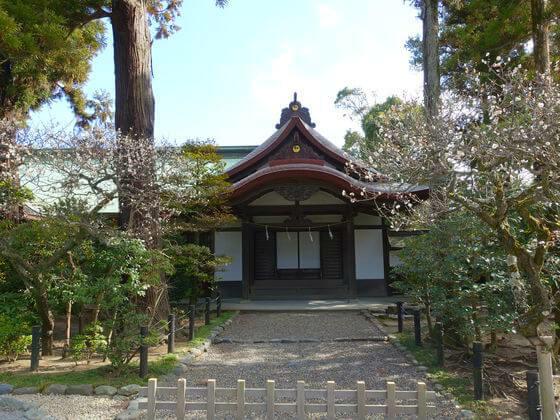 鎌倉 鶴岡八幡宮 梅