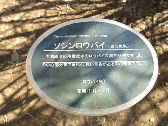 新宿御苑 ソシンロウバイ