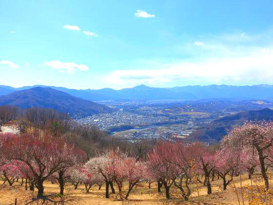 宝登山 武甲山