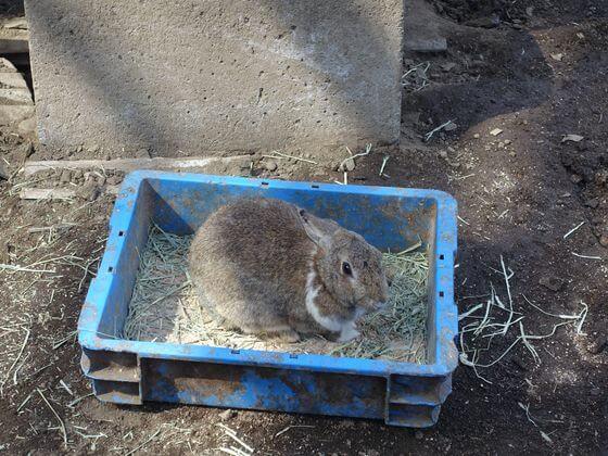 宝登山小動物公園 ウサギ