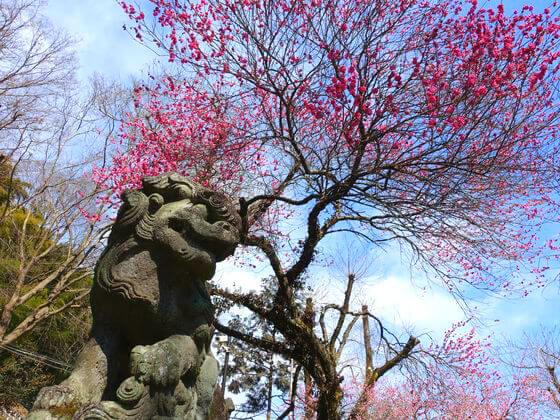 高尾氷川神社 ご利益