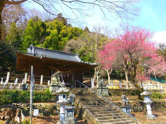 高尾氷川神社 梅