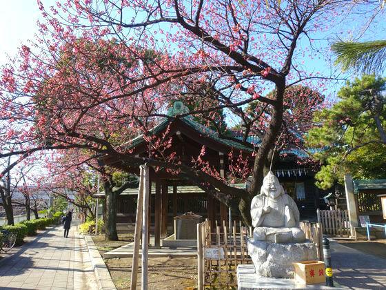 荏原神社 桜