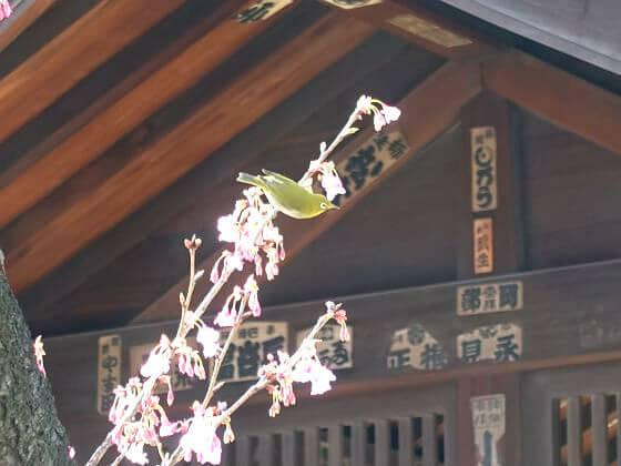 品川区 荏原神社 桜