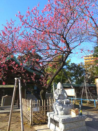荏原神社 桜 開花状況