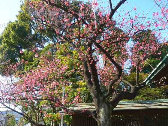 荏原神社 御神木