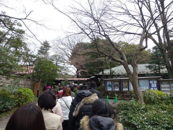 小石川後楽園 桜 混雑