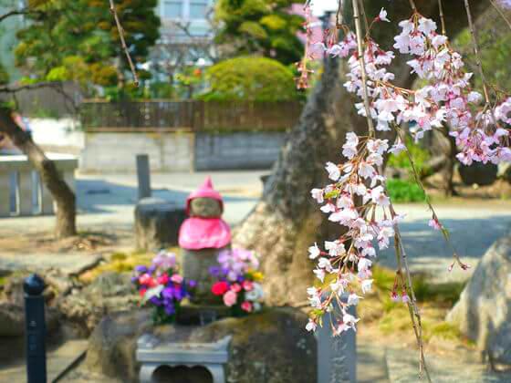 本覚寺 お花見