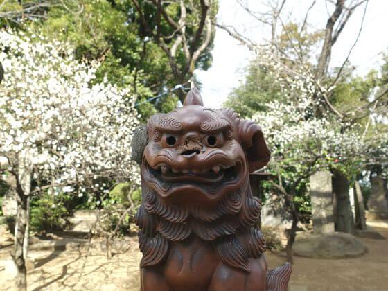 品川神社 ウメ