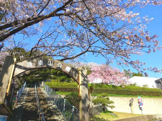 吾妻山公園桜