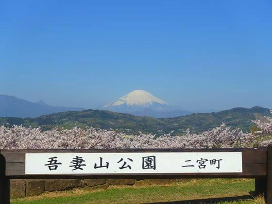 吾妻山公園 桜 富士山