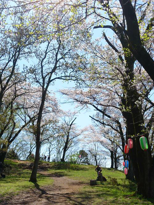 弘法山公園 お花見