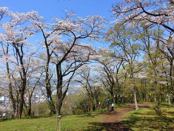 弘法山公園 花見
