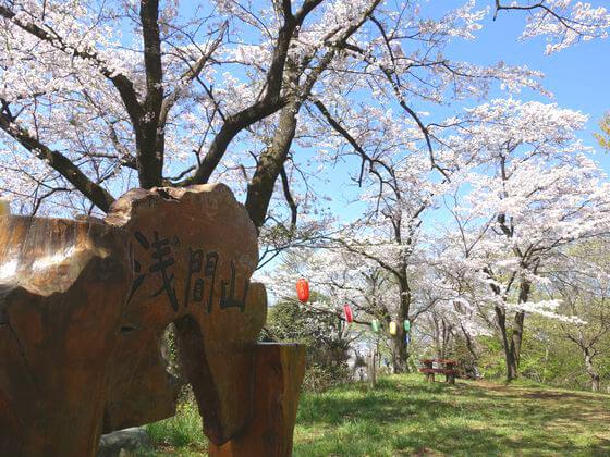 秦野 弘法山公園 桜