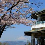 秦野市・弘法山公園の桜・お花見 2017の見頃・開花状況は?