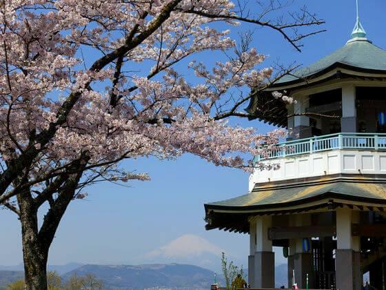 弘法山公園 桜