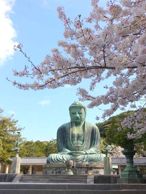 鎌倉大仏 桜