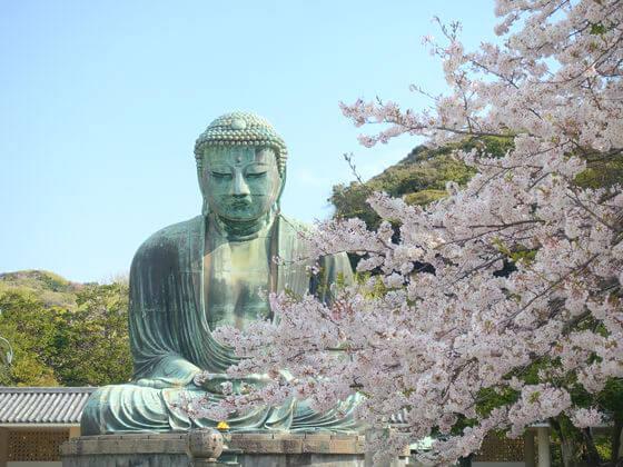 高徳院 桜