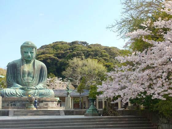 桜 鎌倉大仏