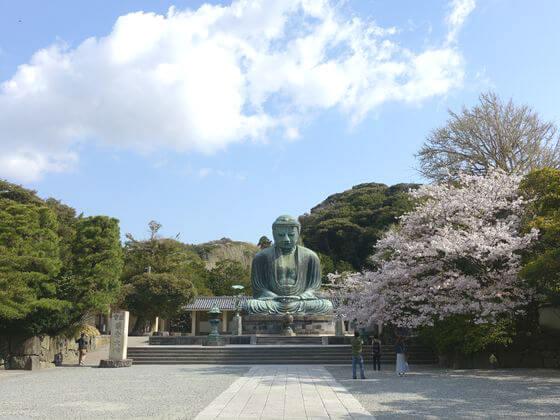 鎌倉 高徳院 桜