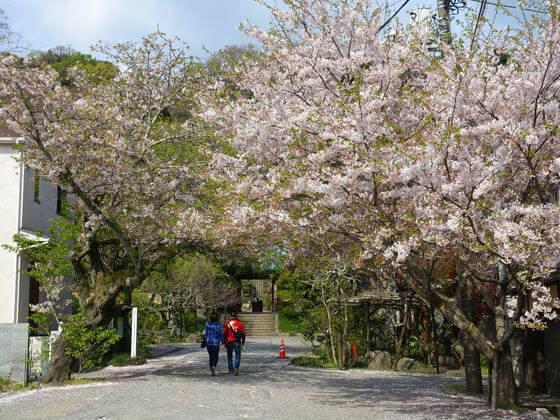 光則寺 桜