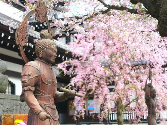 鎌倉 桜 名所