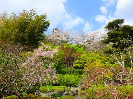 長谷寺 鎌倉 お花見